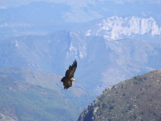 Watching vultures at the foot of the summit dome