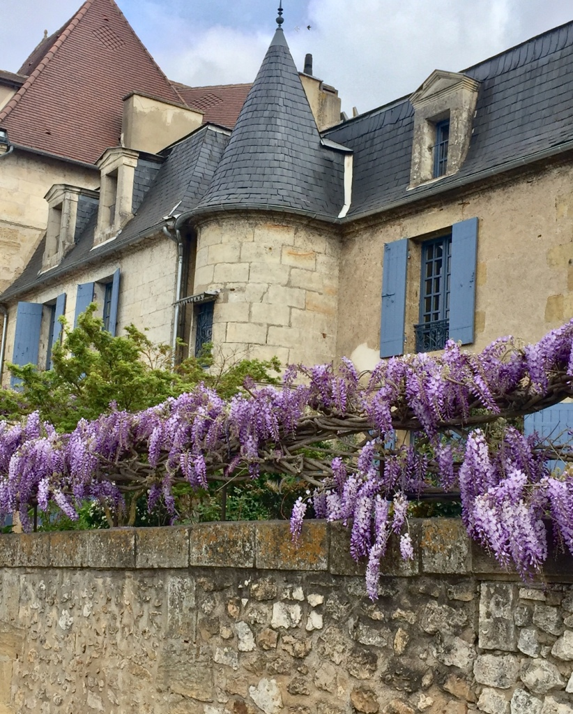 Wisteria on the banks of the Dordogne
